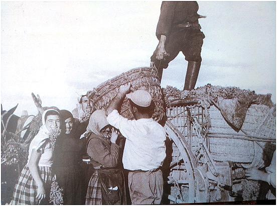 Vendimiadores cargando uva con capachos de esparto