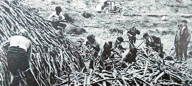 Carboneros del Alto Guadiana en plena faena
